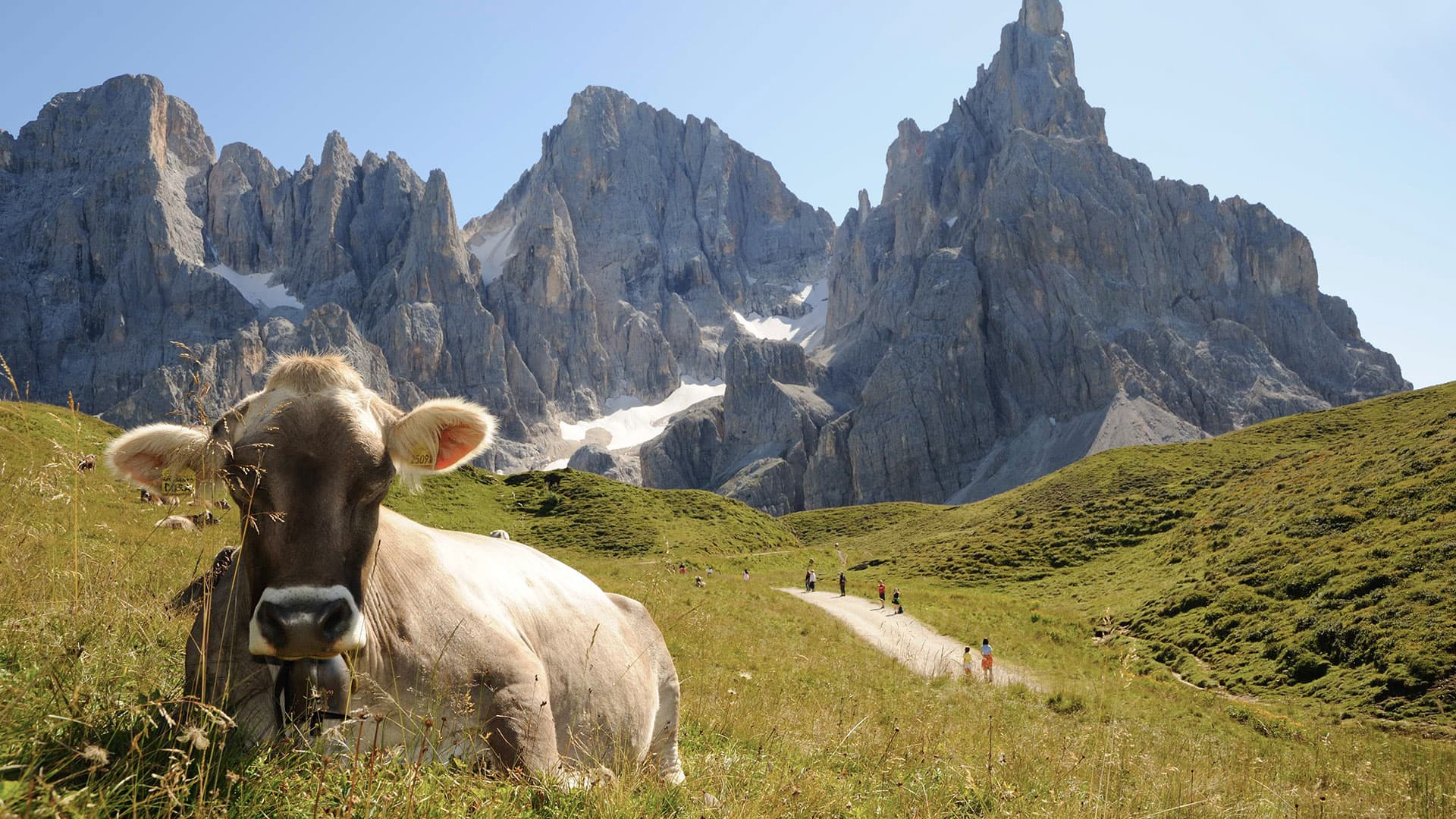 passo-rolle-mucca-bazan